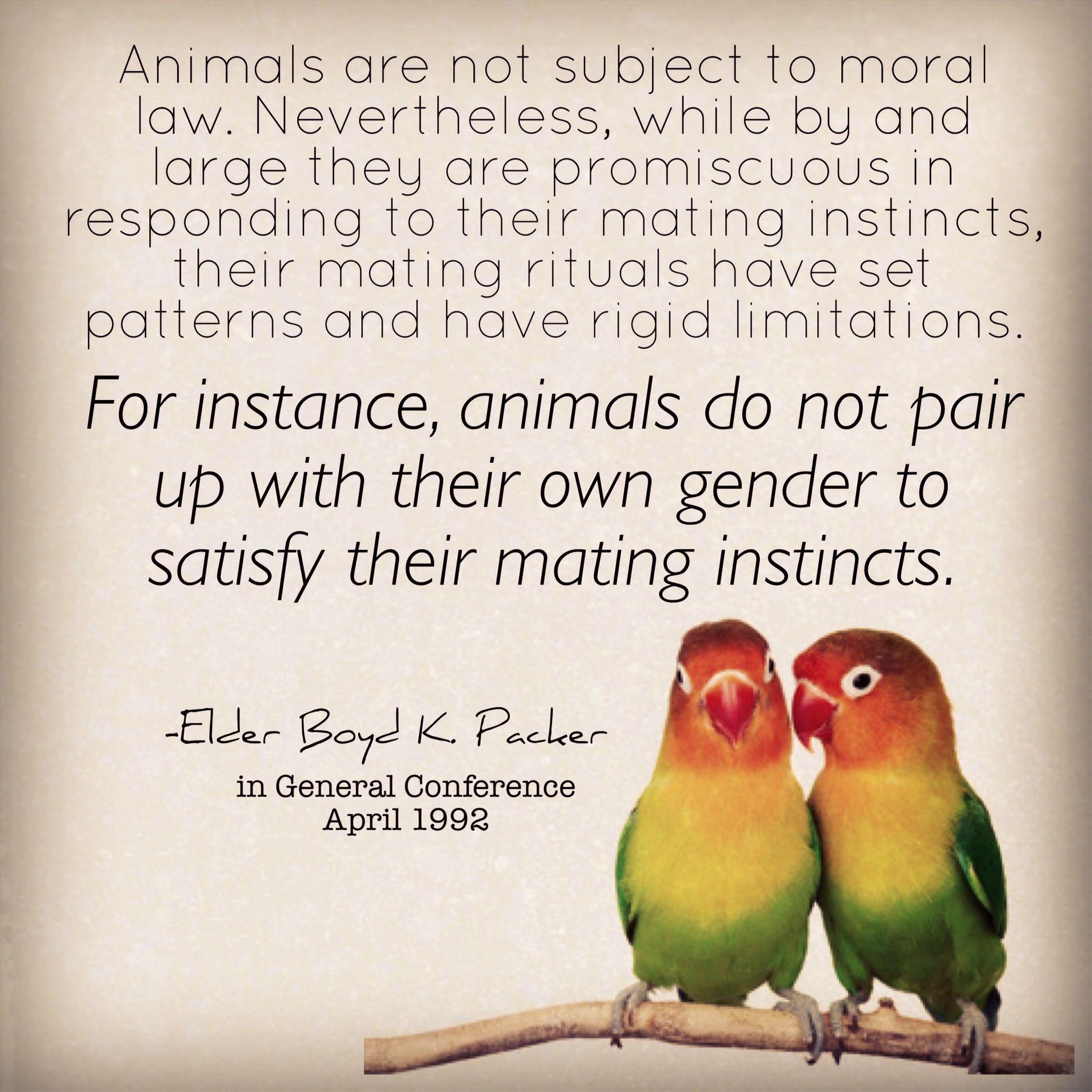 No gay animals